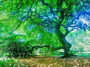 Une forêt magique et ressourçante, les Faux de Verzy